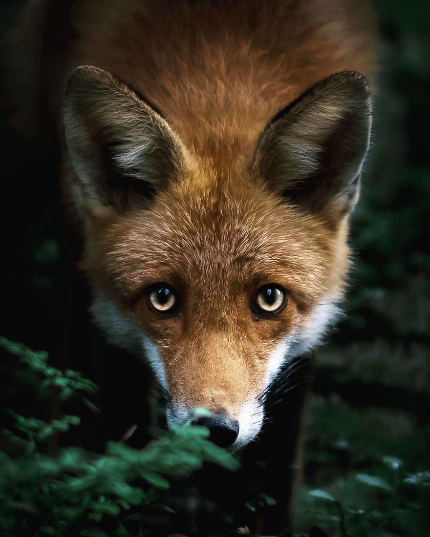 wildlands-animal-photography-joachim-munter-finland-26-5a43ad86cf5da__880