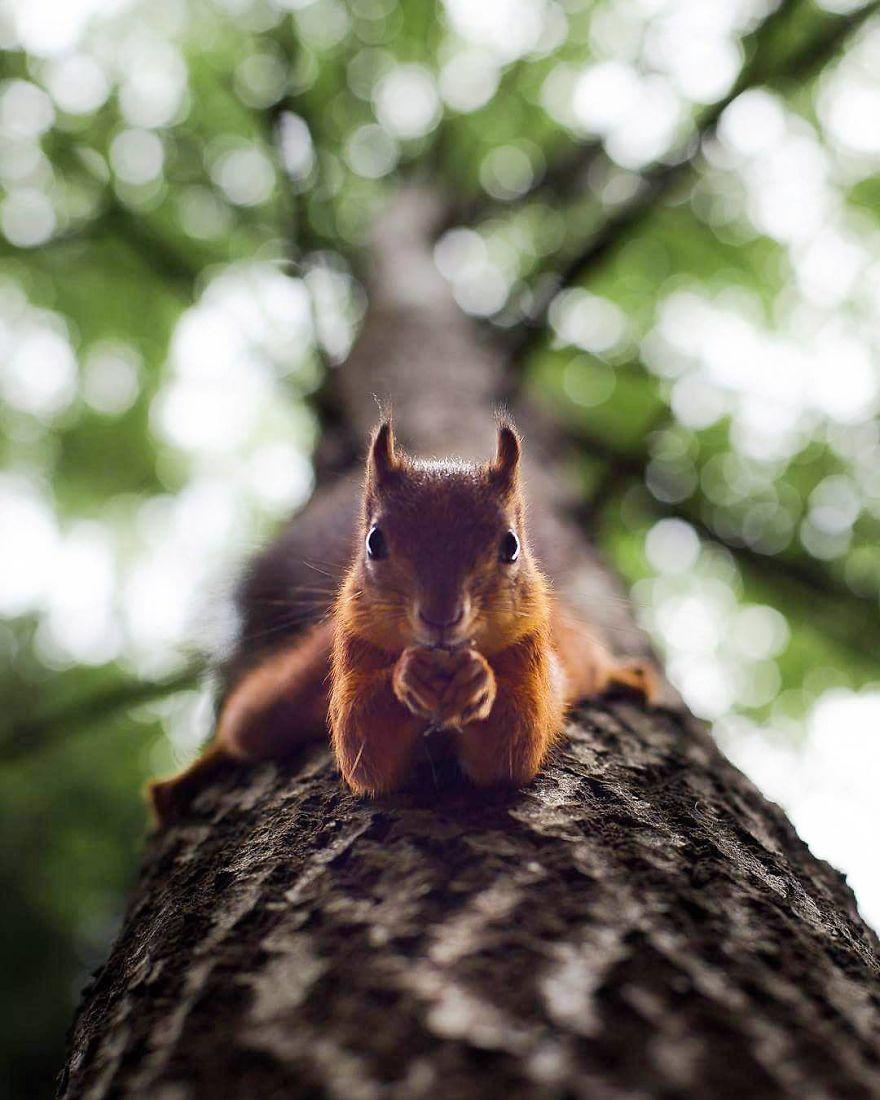 wildlands-animal-photography-joachim-munter-finland-29-5a43ad8ef0329__880
