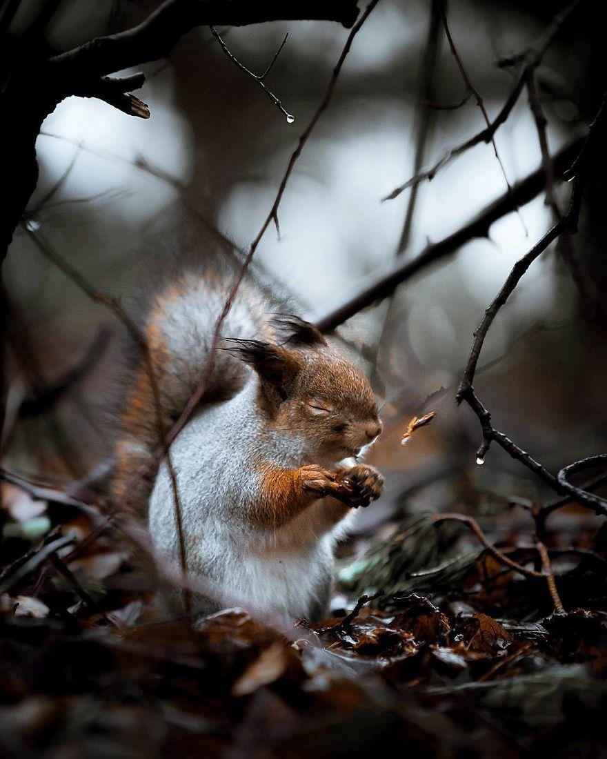 wildlands-animal-photography-joachim-munter-finland-3-5a43ad485cbab__880