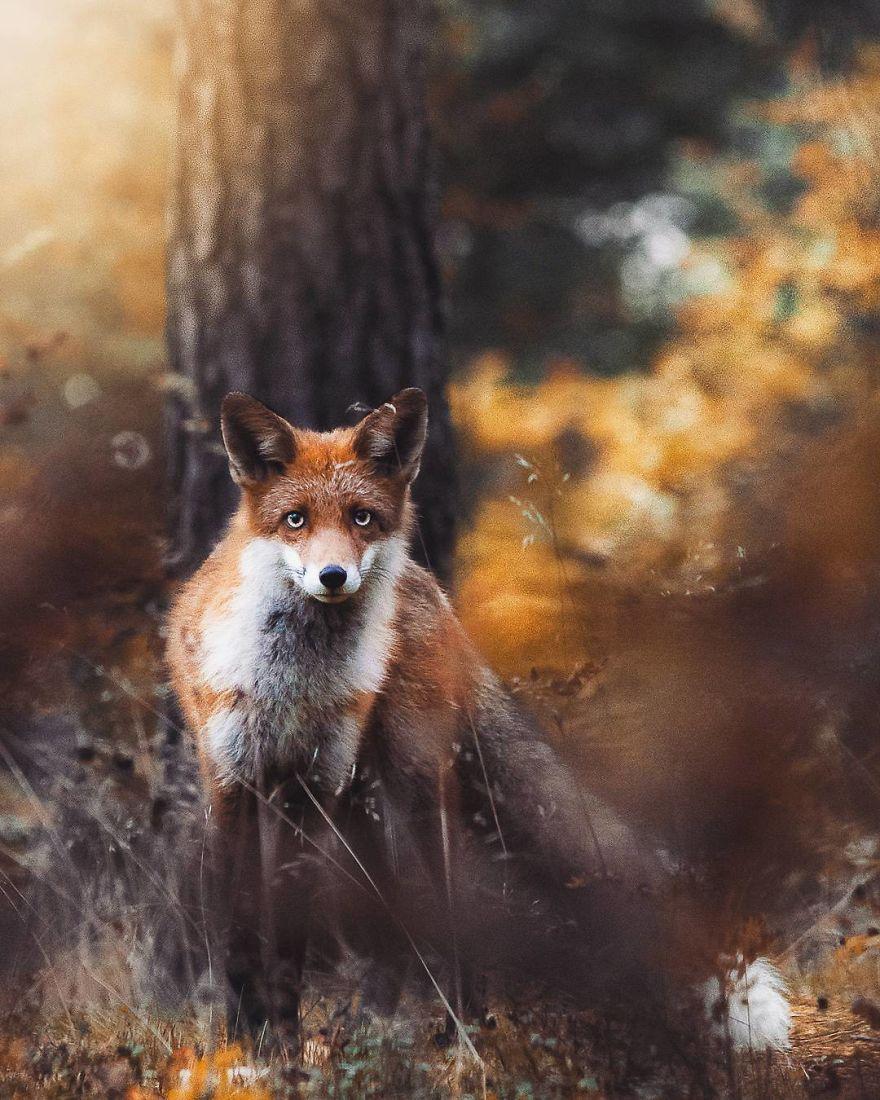 wildlands-animal-photography-joachim-munter-finland-30-5a43ad9200544__880
