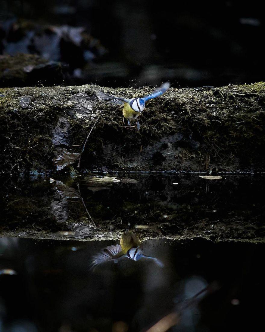 wildlands-animal-photography-joachim-munter-finland-52-5a43adc75738c__880