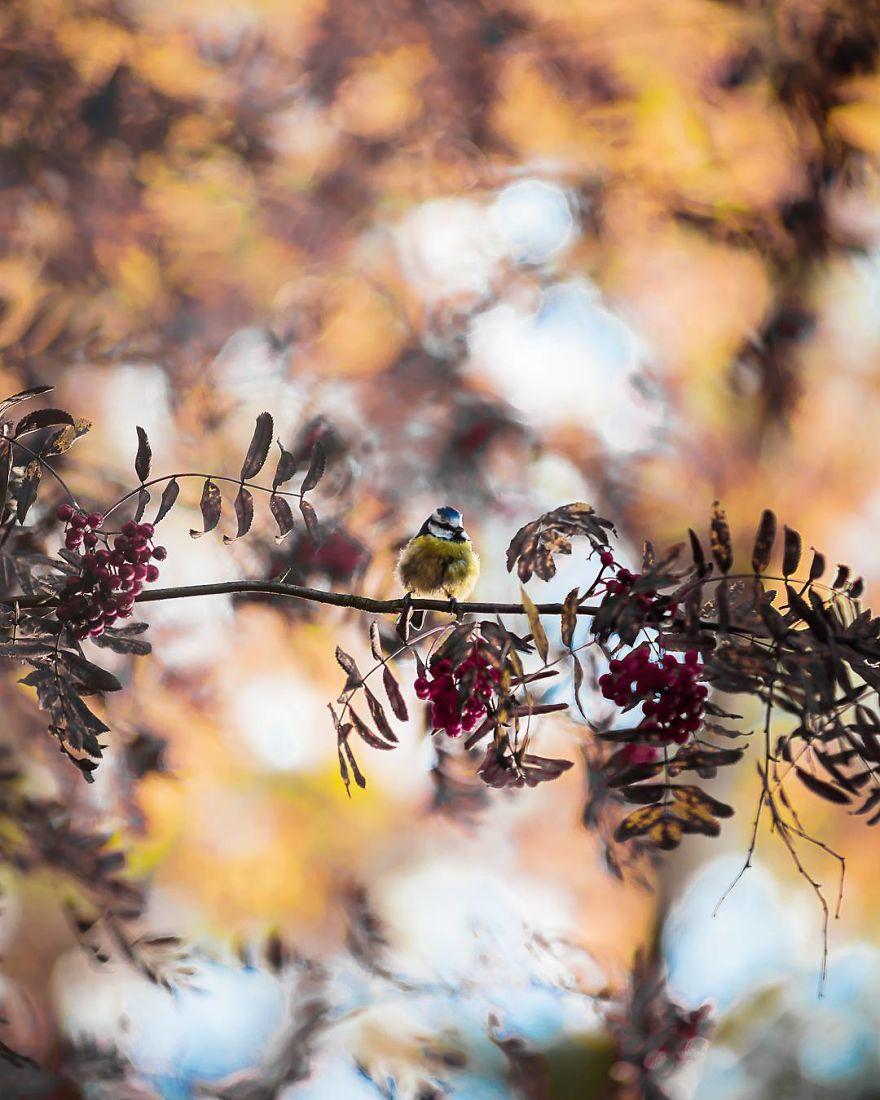 wildlands-animal-photography-joachim-munter-finland-56-5a43add0d3d81__880