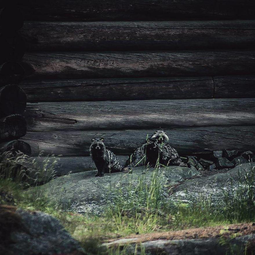 wildlands-animal-photography-joachim-munter-finland-71-5a43adf6dd99a__880