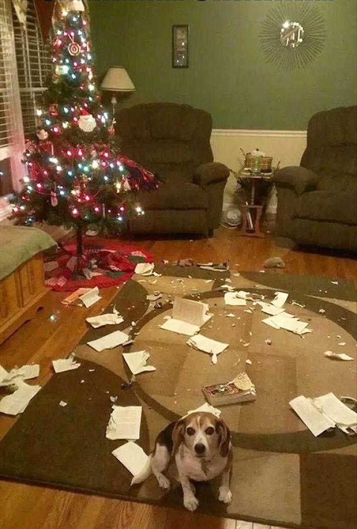 XX-animals-destroying-Christmas-10__700