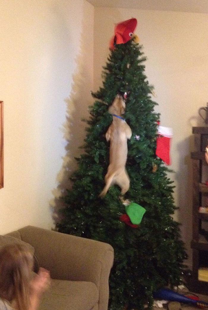 XX-animals-destroying-Christmas-11__700
