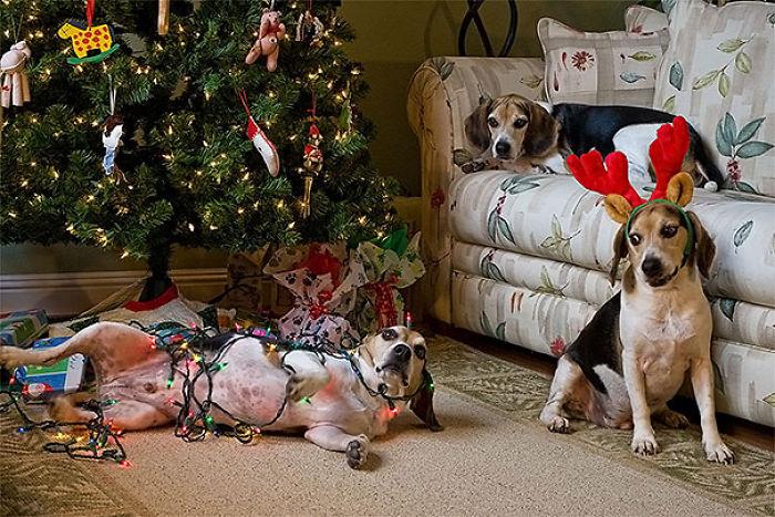 XX-animals-destroying-Christmas-13__700