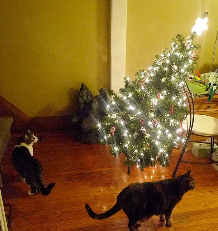 XX-animals-destroying-Christmas-15__700