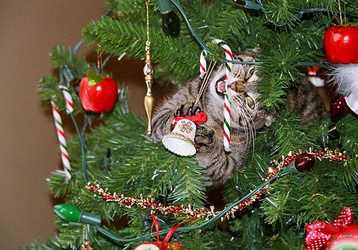 XX-animals-destroying-Christmas-16__700