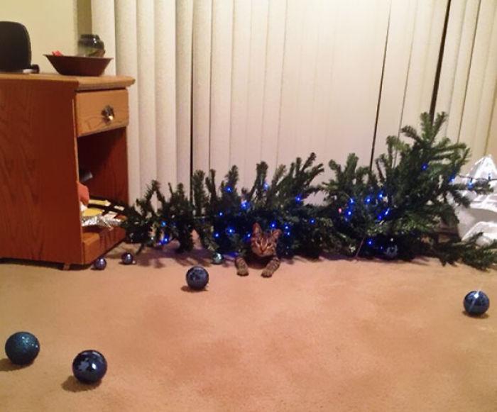 XX-animals-destroying-Christmas-2__700