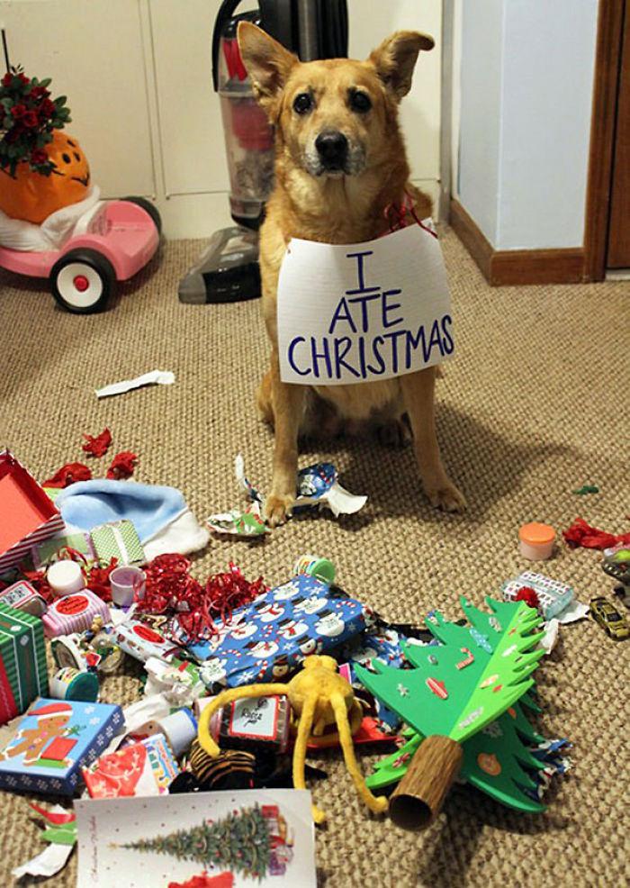 XX-animals-destroying-Christmas-3__700