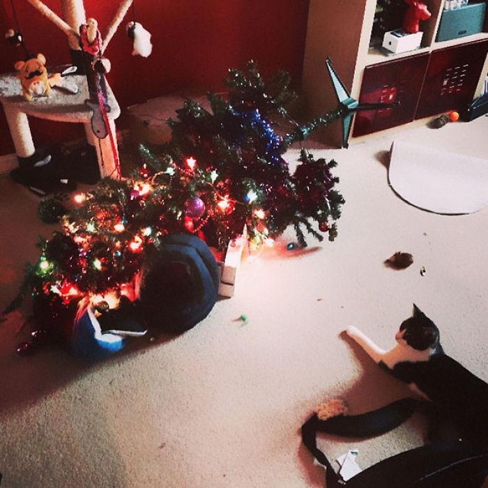 XX-animals-destroying-Christmas-4__700