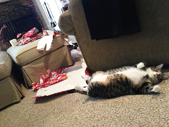 XX-animals-destroying-Christmas-6__700