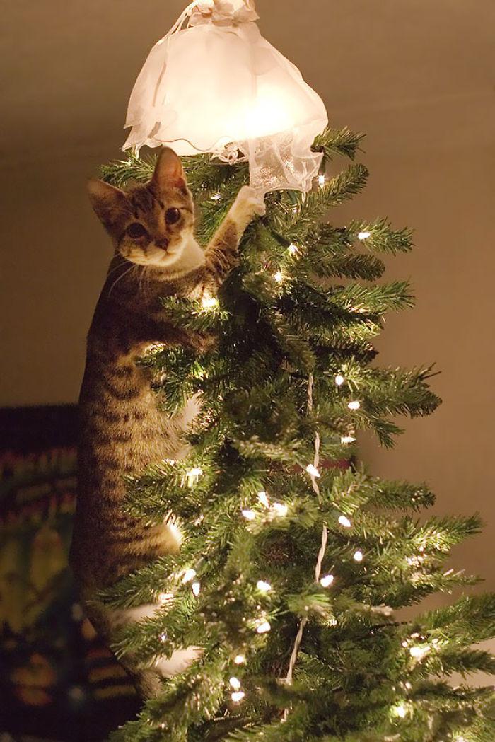 XX-animals-destroying-Christmas-8__700