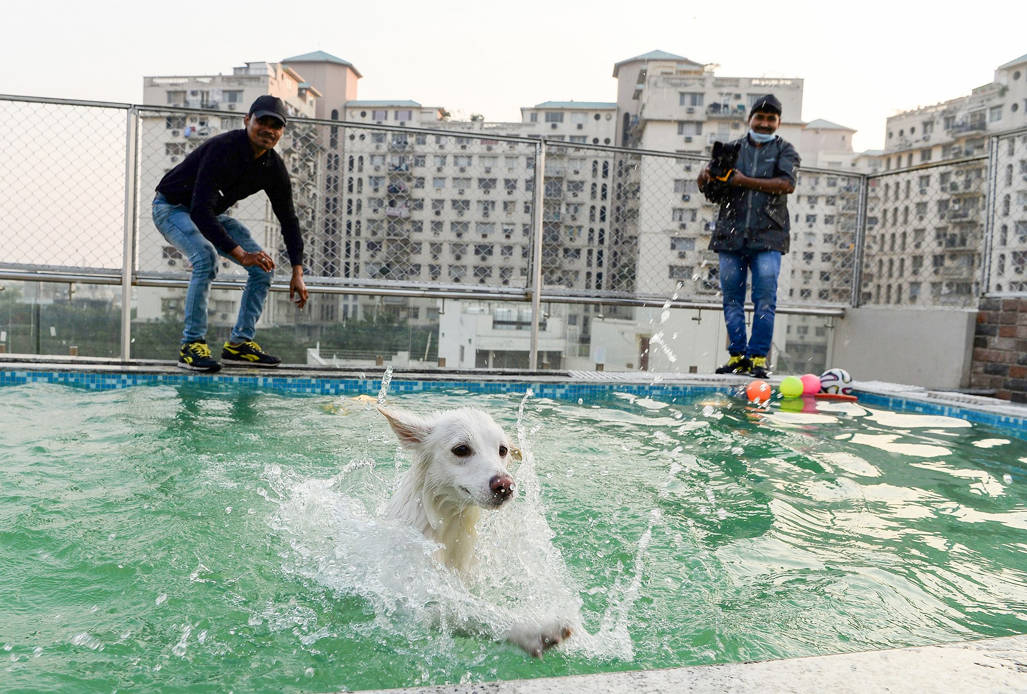 dog-hotel-critterati-lead