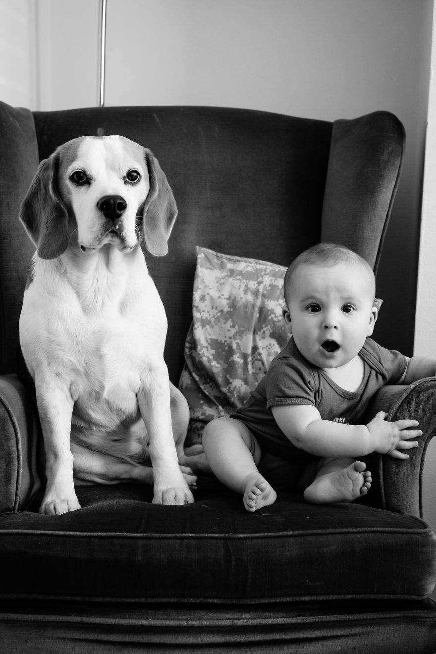 The-Beagle-and-The-Boy-Stanley-and-Jasper-friends-for-life-2017-5a4b497954b4d__880
