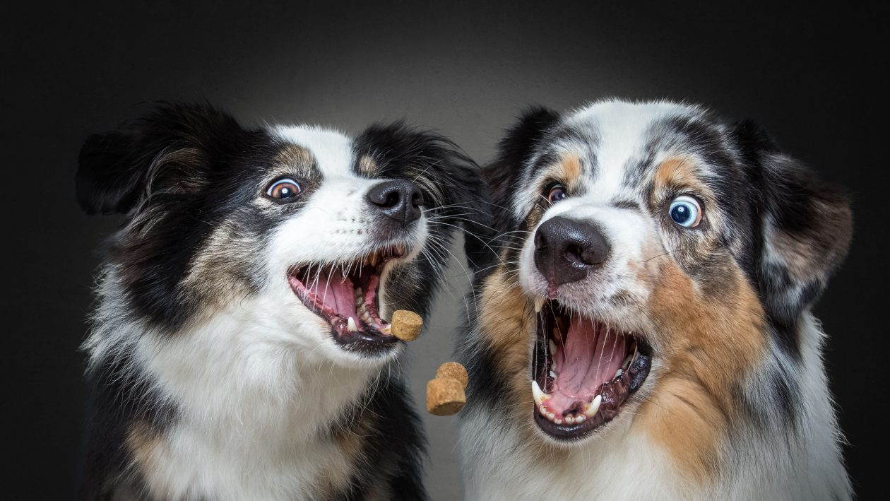 4_CATERS_DOUBLE_DOG_TREAT_CATCH_05-1260x709