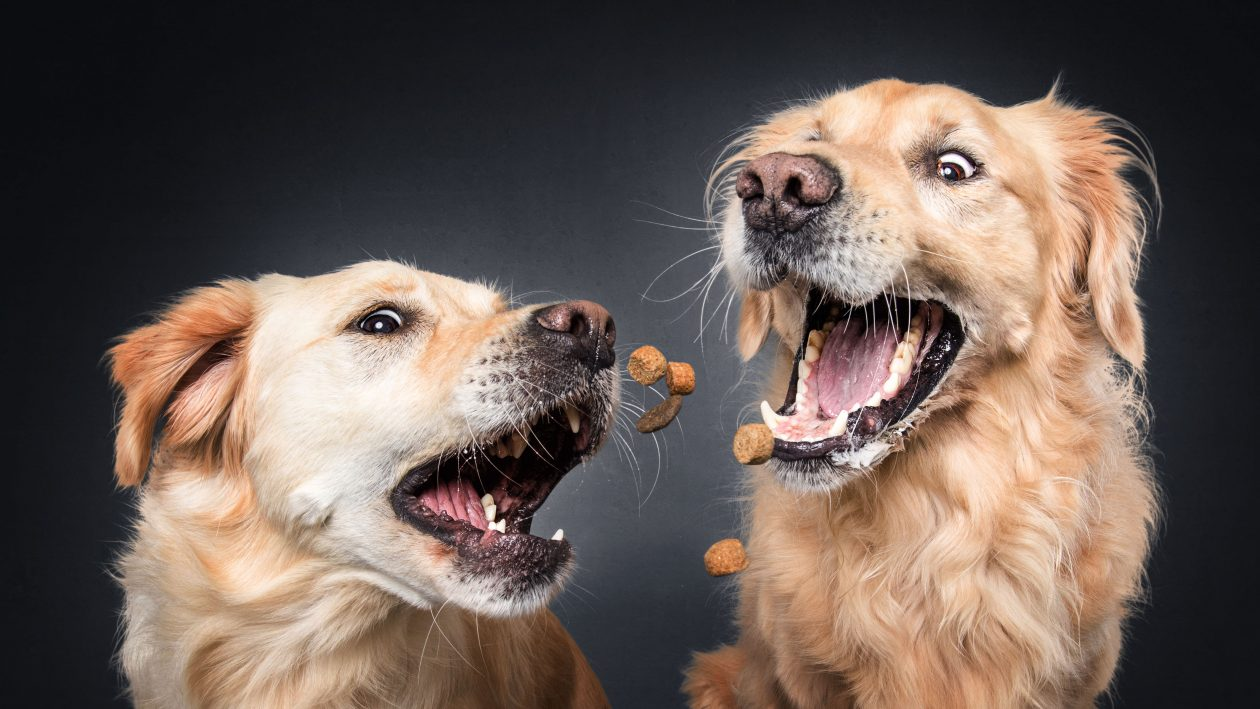 6_CATERS_DOUBLE_DOG_TREAT_CATCH_07-1260x709