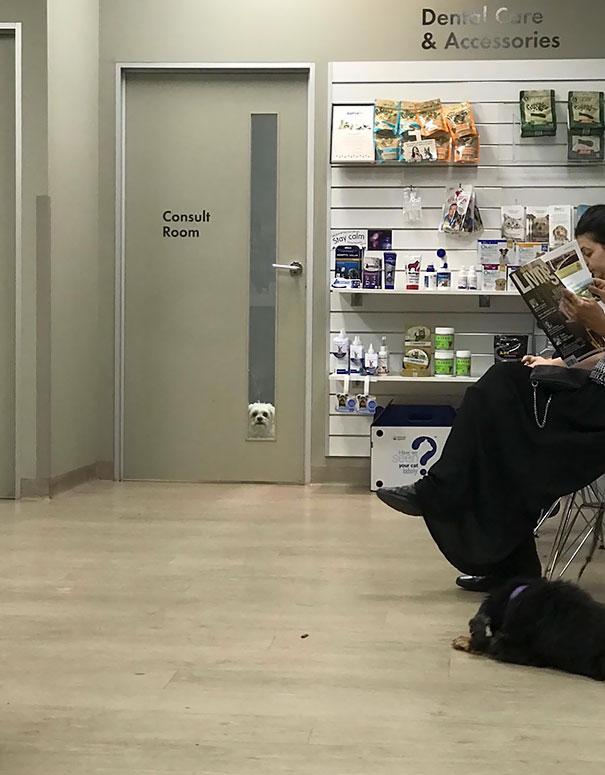 funny-dogs-vet-clinic-6-5a37878d4674d__605