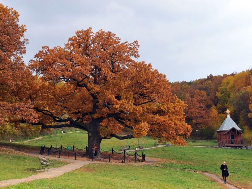 Árbol Europeo 10