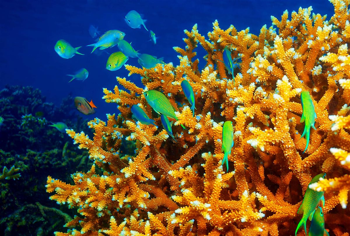 ecosistemas-en-peligro_8216a311_1200x810