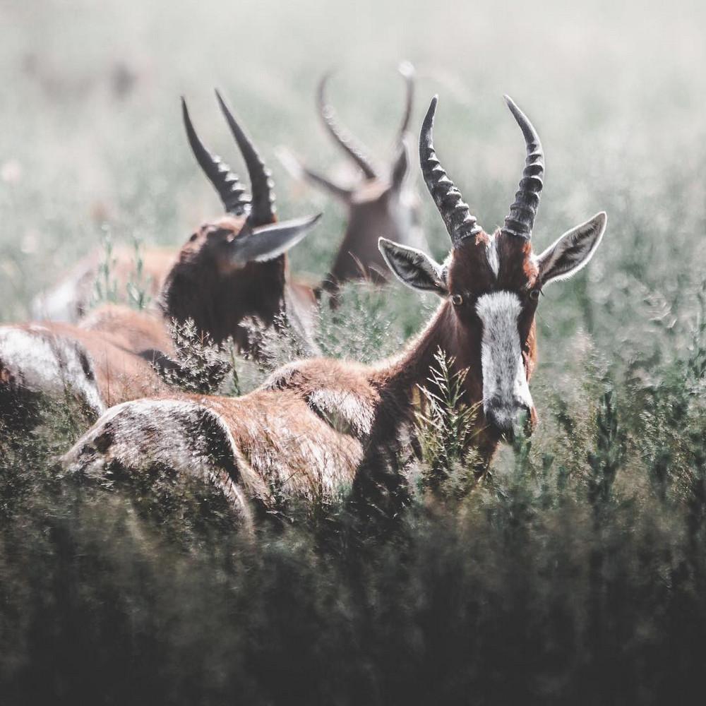 fotograf-Donal-Boyd_12