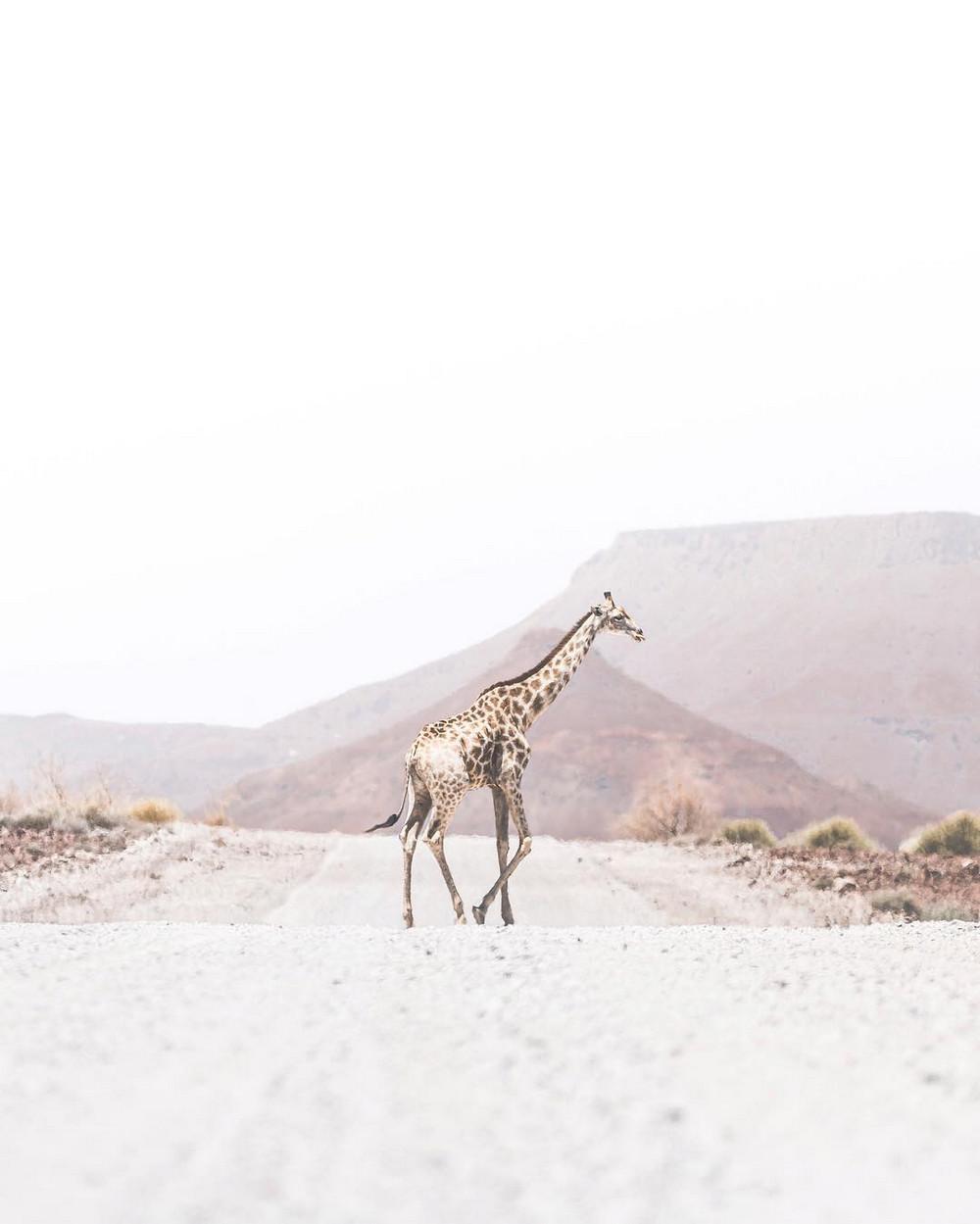 fotograf-Donal-Boyd_18