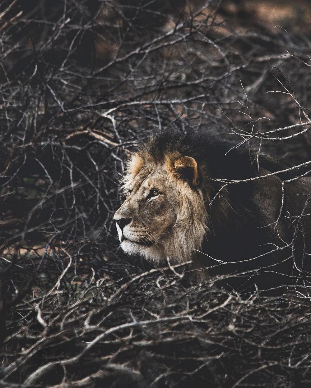 fotograf-Donal-Boyd_27