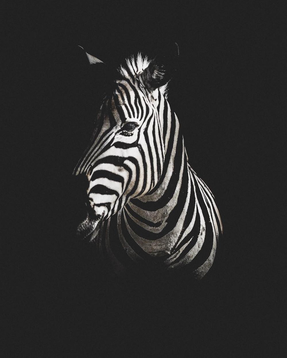 fotograf-Donal-Boyd_41