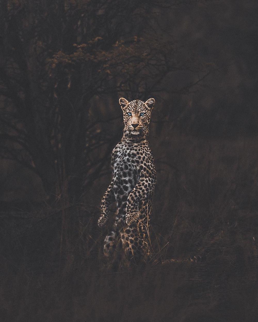 fotograf-Donal-Boyd_66