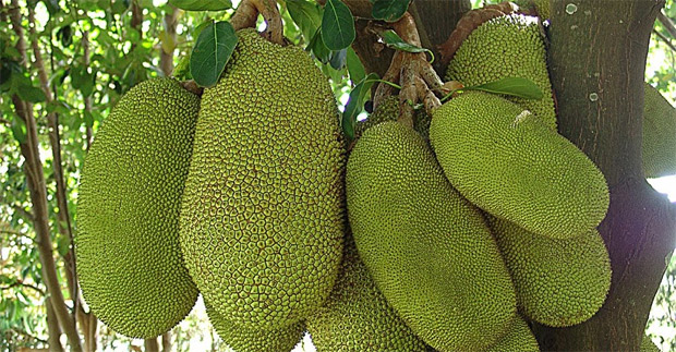 frutas-raras-2