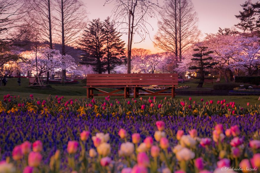 I-Captured-Sakura-Bloom-In-Japan-5abb3d288d09b__880