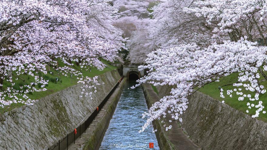 I-Captured-Sakura-Bloom-In-Japan-5abb3e9d9c222__880