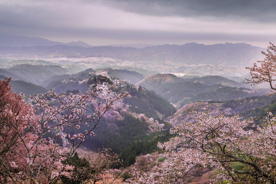 I-Captured-Sakura-Bloom-In-Japan-5abb68872470d__880