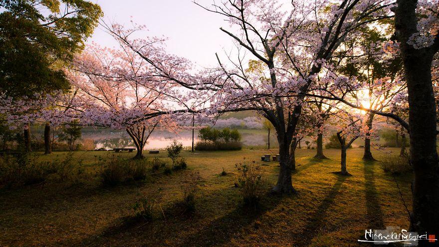 I-Captured-Sakura-Bloom-In-Japan-5abc1ae54802e__880