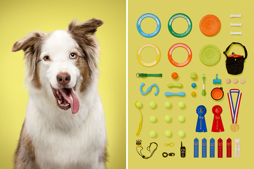 I-photographed-6-dogs-and-their-possessions-to-show-you-the-life-they-live-5acf1d240b42a__880