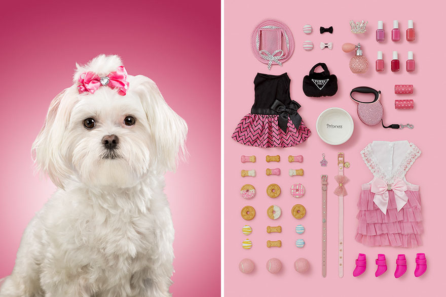 I-photographed-6-dogs-and-their-possessions-to-show-you-the-life-they-live-5acf1d2bcd533__880
