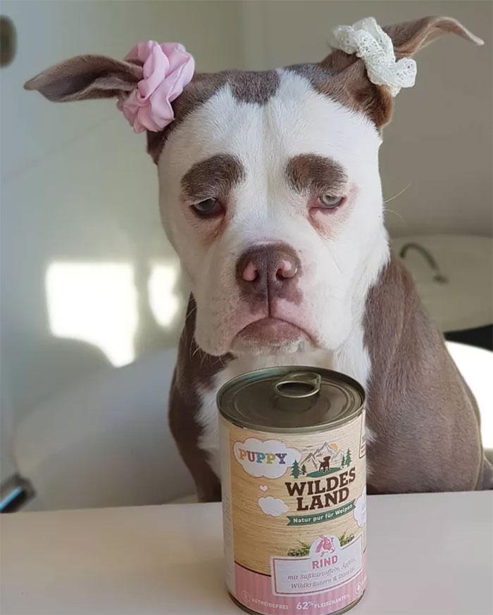 sad-dog-madame-eyebrows-english-bulldog-1-5ac47c4d8002d__700