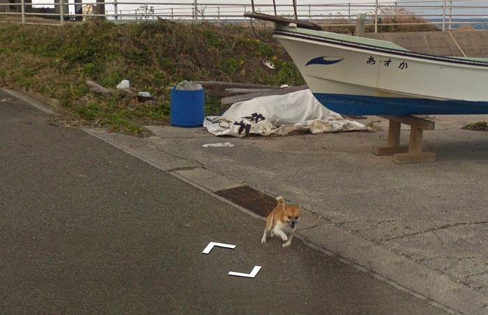 tiny-dog-follows-street-view-car-kagoshima-japan004