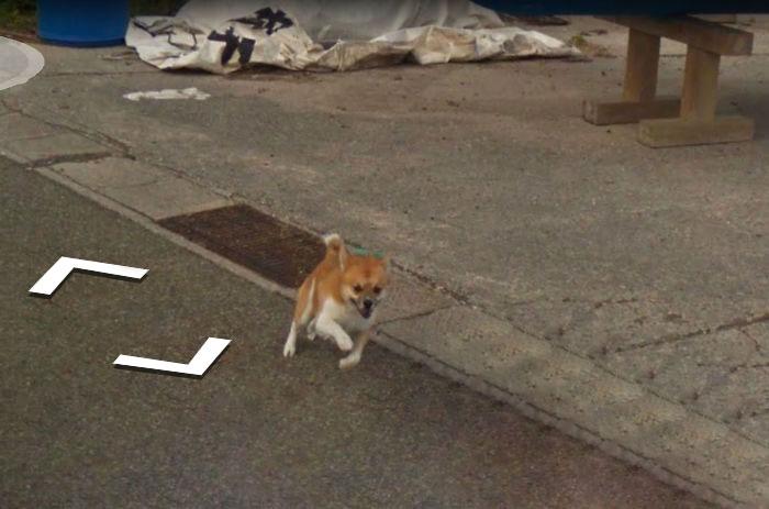 tiny-dog-follows-street-view-car-kagoshima-japan005