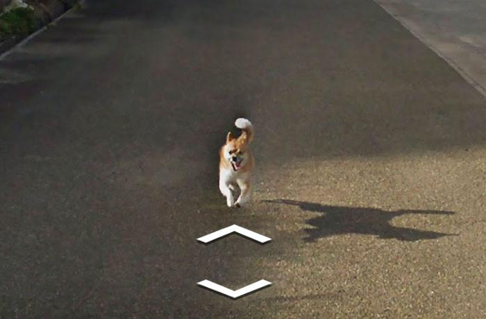 tiny-dog-follows-street-view-car-kagoshima-japan007