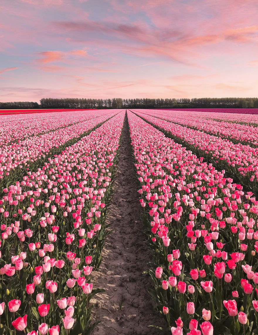 We-Photographed-The-Netherlands-Exploding-In-Colorful-Tulip-Fields-5ae5944e09f6e__880