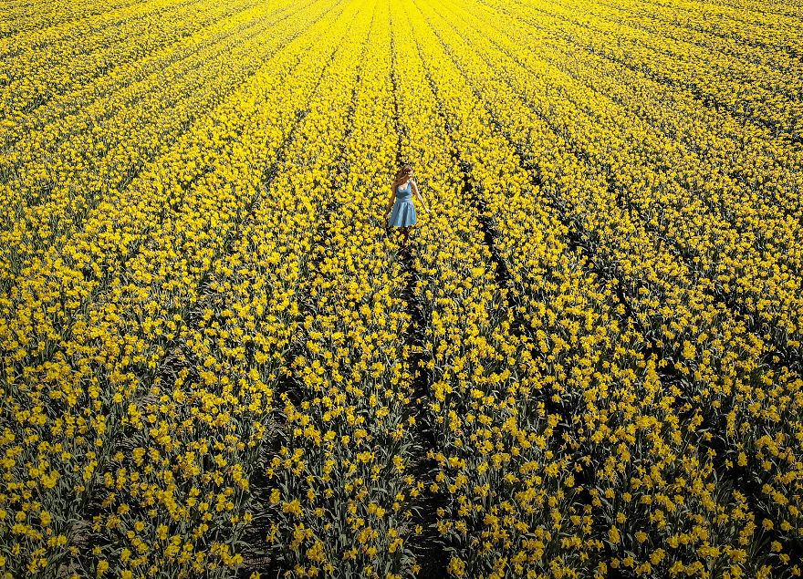 We-Photographed-The-Netherlands-Exploding-In-Colorful-Tulip-Fields-5ae5949192919__880