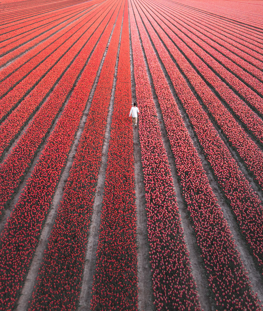 We-Photographed-The-Netherlands-Exploding-In-Colorful-Tulip-Fields-5ae594ce2d19f__880