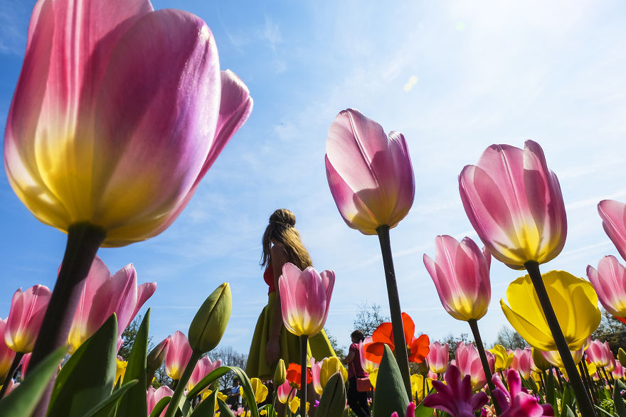 We-Photographed-The-Netherlands-Exploding-In-Colorful-Tulip-Fields-5ae596322462b__880