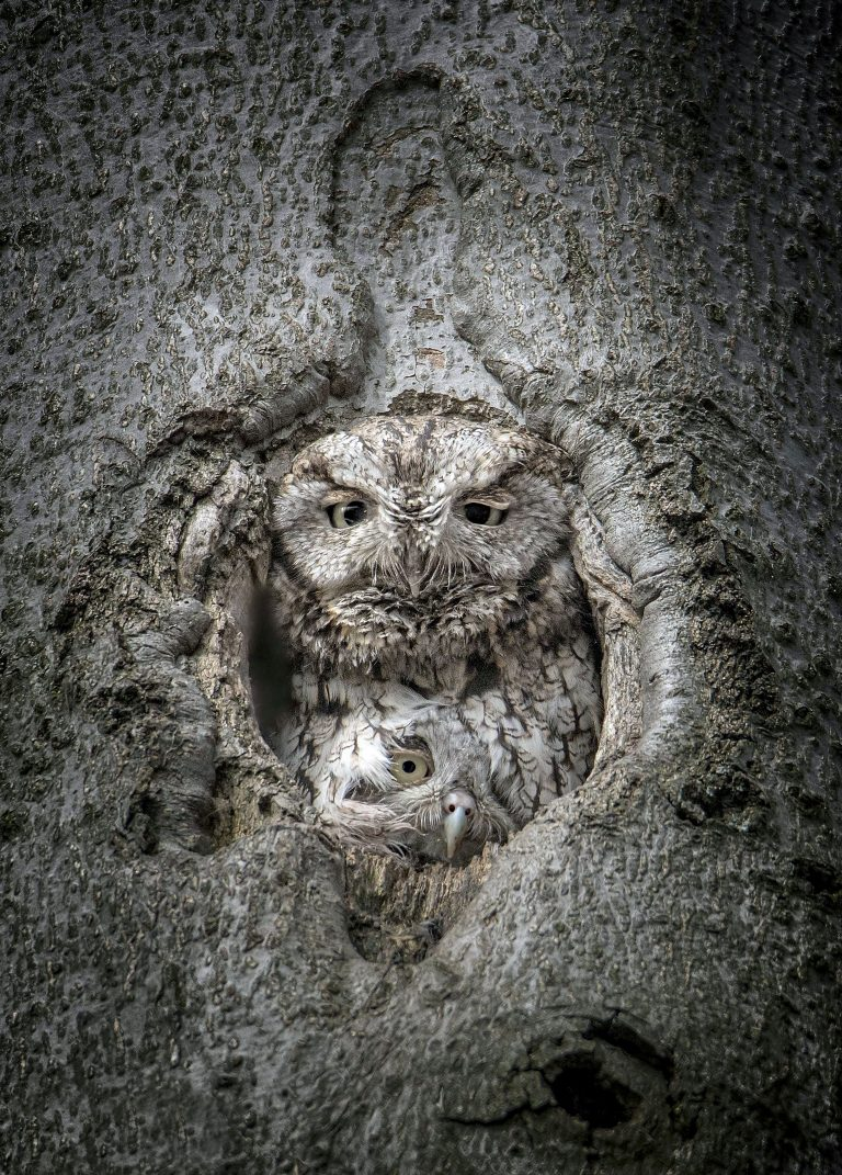 0_CATERS_DOUBLE_NEST_OWLS_01-768x1071