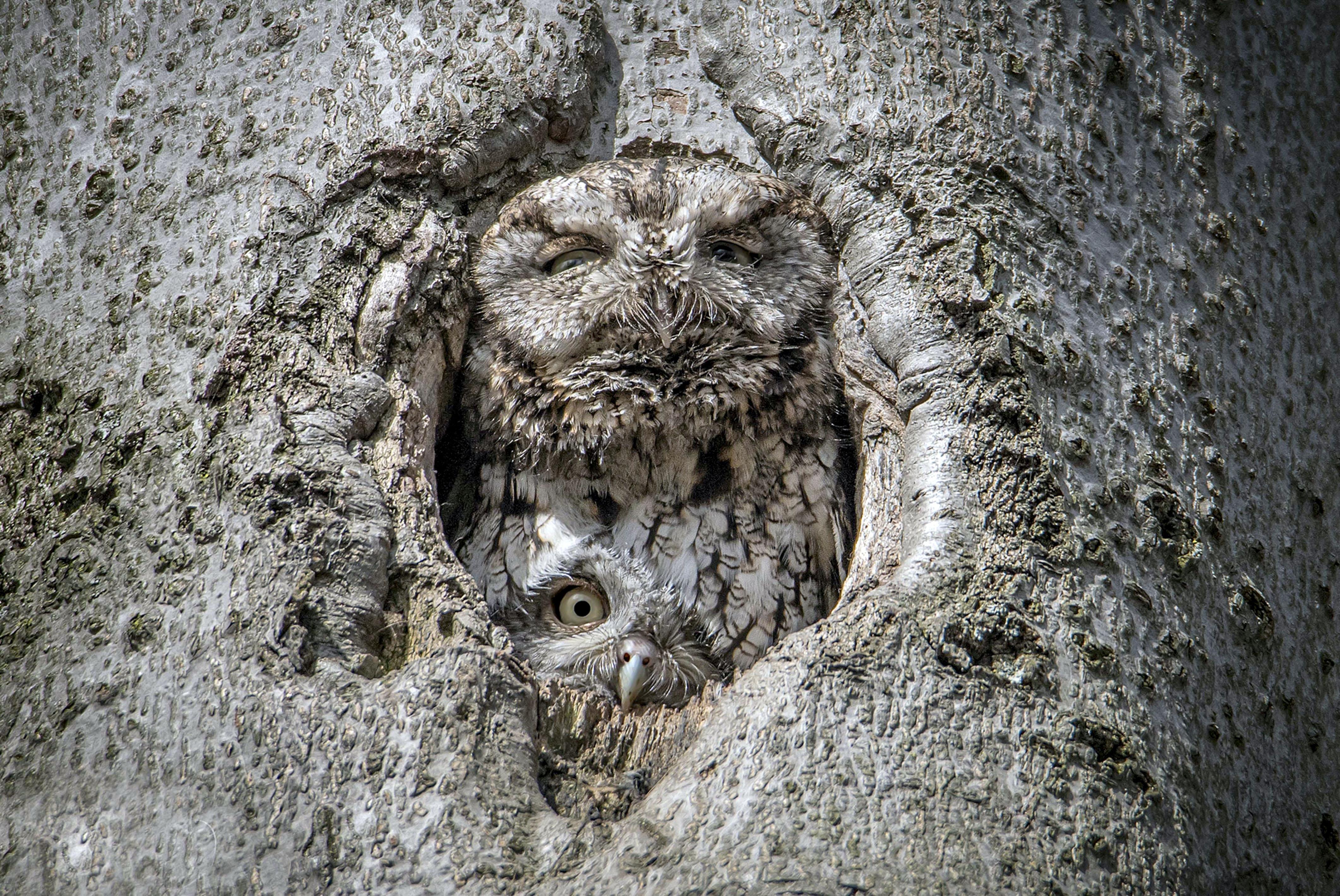 DOUBLE NEST CAMO OWLS