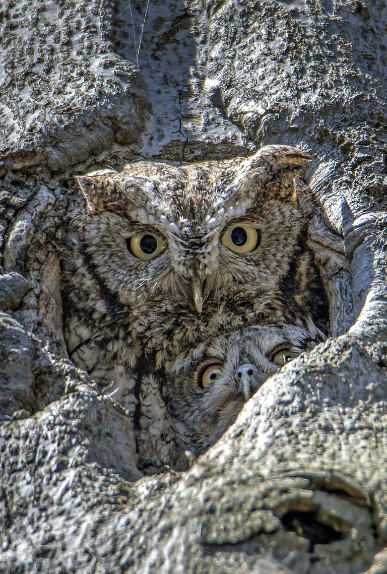6_CATERS_DOUBLE_NEST_OWLS_07-768x1139