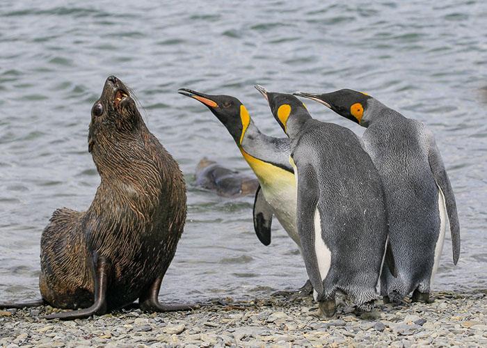 funny-animals-pics-comedy-wildlife-photography-awards-2-5b07b855266b0__700