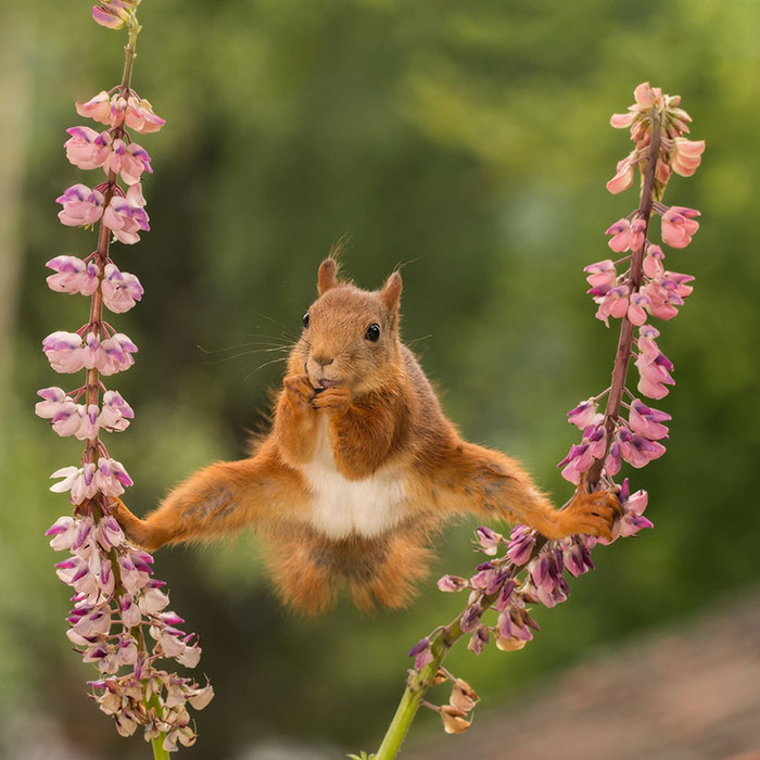 funny-animals-pics-comedy-wildlife-photography-awards-3-5b07b856da9ec__700