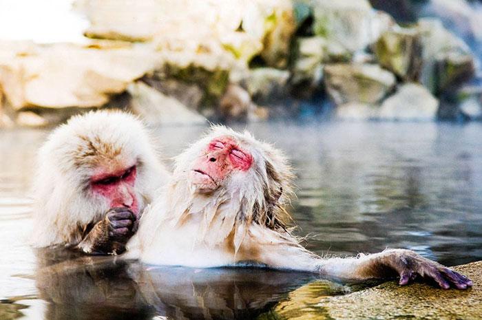 funny-animals-pics-comedy-wildlife-photography-awards-30-5b07b89165bdd__700